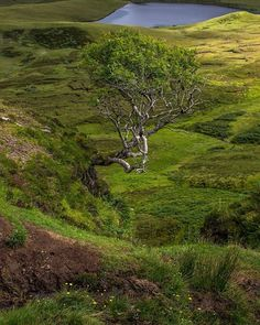 The Hanging Tree at Quiraing on the Isle of Skye, Scotland.