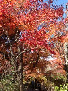 Tenryu temple in kyoto