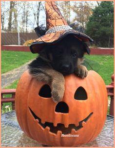 >>> PR😜SD😤CIMI <<<  >> HALL🎃WEEN << Qui >>> 👻 http://tormenti.altervista.org/tag/halloween 👻