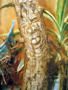 Unimpressed tree face :P Secret Life Of Plants, Weird Trees, Enchanted Tree, Trees Beautiful, Tree People, Magical Tree, Tree Faces, Wood Tree, Animals Images