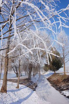 Snowy frosty January