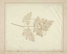 """William Henry Fox Talbot, """"Leaf of a Plant"""" (plate VII) from Part 2, 21 June 1845 of """"The Pencil of Nature,"""" London, Longman, Brown, Green and Longmans, 1844–1846, salt paper print from photogenic drawing negative, Yale Center for British Art, Paul Mellon Fund"""