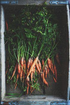 carrots by Melanie DeFazio