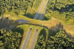 Amazing Animal Bridges And Crossings That Save Of Animals Every Year - Wildlife Crossing In The Netherlands Banff National Park, National Parks, Bridge Design, Save Animals, Landscape Architecture, Beautiful Architecture, Conservation, Animal Crossing, Cool Photos