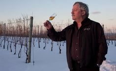 Most icewine harvests happen at night because the sun starts to melt the grapes on the vine in the morning, diluting the flavor. Icewine grapes need to be harvested at -8C or colder to concentrate the sugars and flavours in the juice, leaving behind the frozen ice crystals. Even the pressing happens in a cold, uninsulated building in the middle of the vineyard. Nova Scotia Icewines consistently win top honours in national and international competitions. http://www.nsicewinefestival.ca