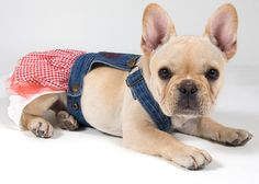 There are some dogs that just weren't meant to work. We aren't saying they are lazy, but can you imagine a French Bulldog doing the job of a German Shepherd?