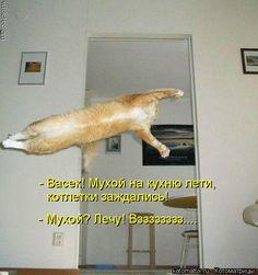 - Васек! Мухой на кухню лети, котлетки заждались! - Мухой? Лечу! Взззззззз.......