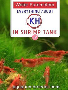 Water Parameters: Everything about KH in Shrimp Tank  Aquarium, Dwarf shrimp, freshwater crabs, crayfish, fish, snails, care, maintenance, problems, treatment, measure, test kit.