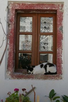 Window Cat, Santorini
