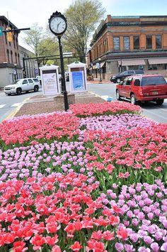 Lockerman Street in the Spring.