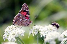 Mariposa, Ala, Flor, Insectos, Verano
