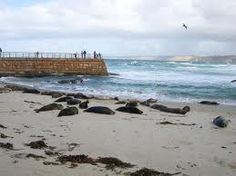 I definitely want to go to San Diego and hang with the sea lions  on Seal Beach! They're so stinkin' cute!