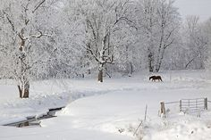 3rd Place (Farmscapes): Horse in Fresh Snow, Gary Hamer | Flickr - Photo Sharing!
