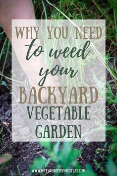 Need some tips for a beginner vegetable garden? Don't forget this very important task of weeding for maximum yield. Starting A Vegetable Garden, Vegetable Garden For Beginners, Backyard Vegetable Gardens, Gardening For Beginners, Planting Vegetables, Fresh Vegetables, Growing Vegetables, Small Farm, Weeding