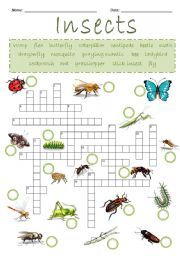 Insects Crossword Puzzle - ESL worksheet by List Of Insects, Insects Names, Insect Activities, Brownie Ideas, Crossword Puzzles, Vocabulary Worksheets, Teaching English, Girl Scouts, Esl