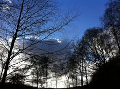 Another shot of that sky and those trees by Charlie Cannell, via Flickr