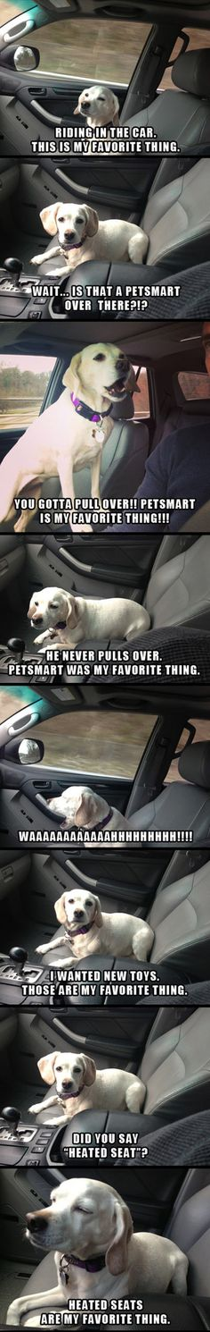 Funny pictures about A Dog's Favorite Thing. Oh, and cool pics about A Dog's Favorite Thing. Also, A Dog's Favorite Thing photos. Funny Animal Memes, Cute Funny Animals, Dog Memes, Funny Animal Pictures, Funny Cute, Funny Dogs, Hilarious, Funny Humor, Super Funny
