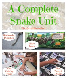 A Complete Snake Unit {Free Printables} is just what you need for that inquisitive boy or girl who loves reptiles! We love this Snake Unit Study for our Homeschool! Kids Learning Activities, Science Activities, Educational Activities, Science Lessons, Teaching Resources, Reptiles, Amphibians, Lizards, Kindergarten Science