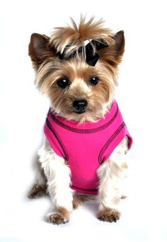 ZoeDoggy of Beverly Hills is proud to present Doggie Design's Spring 2015 line of Tank Tops for DogsSport Spot Tanks - Blue Curacao is made with High Quality Interlock Stitch Fabric that is very soft