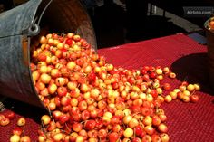 Vacation Rentals, Homes, Experiences & Places - Airbnb Rainier Cherries, White Cherries, Perfect Place, Sweet Tooth, Berries, Vacation, Fruit, Flowers, Vacations