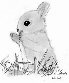 bunny drawing deviantart bunnies draw easy sketches rabbit drawings rabbits animals