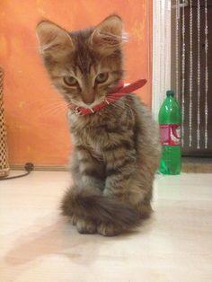 My cat!:) she's Mimi:)