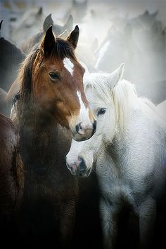 Gathering mares ... by Ree Drummond