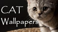 Best app with cute cat wallpapers . This app will fill your mobile with natures view and adorable cats pictures which will turn your sad mood to pleasure with sweet smiles and funny postures. Get this app and make your mobile fill with cute cats and kittens.