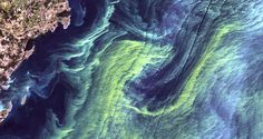 From Space: pollen yellow swirls on a deep blue sea