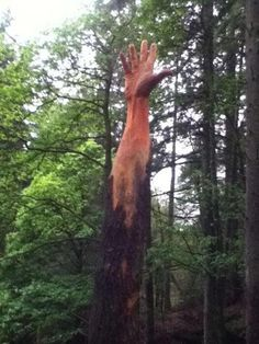Simon O'Rourke BBC News - Lake Vyrnwy tallest tree carved into giant hand - Dec 2011 Tree Carving, Wood Carving Art, Wood Carvings, Chainsaw Carvings, Love Garden, Garden Art, Tree Sculpture, Wooden Sculptures, Tree Trunks