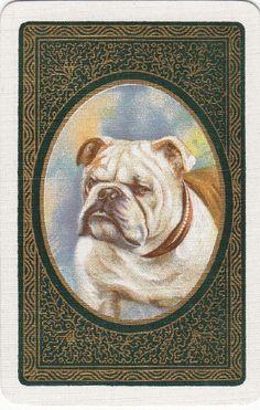 *Vintage Swap/Playing Card - 1 Single - English dog head Bulldog