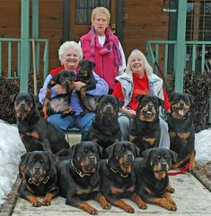 Everything I admire about the Calm Rottweiler Puppies Big Dogs, I Love Dogs, Cute Dogs, Dogs And Puppies, Chihuahua Dogs, Doggies, Rottweiler Love, Rottweiler Puppies, German Rottweiler