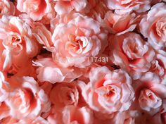 Cheap decorative ceiling roses, Buy Quality decor directly from China roses wishes Suppliers: Item information:wedding decorate flowerMaterial:high quality silkFlower`s diameter: about 8cm/3.15