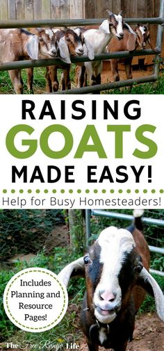 Raising goats made easy! The Busy Homesteader& Goat Management Binder is your one stop for all of your goat care and needs! Raising goats made easy! The Busy Homesteaders Goat Management Binder is your one stop for all of your goat care and needs! Keeping Goats, Raising Goats, Raising Chickens, Happy Goat, Goat Care, Nigerian Dwarf Goats, Baby Goats, Mini Goats, Mini Farm