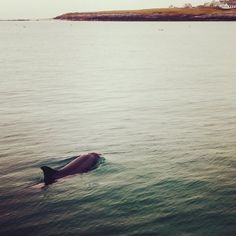 Dusty the Dolphin takes an early morning trip to Inisheer (Inis Oírr) today. #aranislands