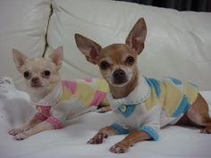 Fifi & Romeo cashmere sweaters on two chihuahua cuties