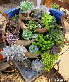 Broken pot creation - from Succulent Extravaganza 2013