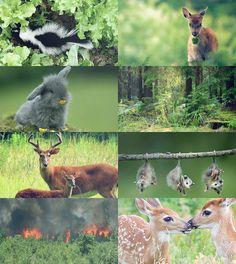 Fairy Tale(ish) Picspam→ Bambi