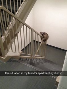 """Just tell your friend to move out. It's the raccoon's house now."""