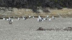 More birds -  Spooner's Cove