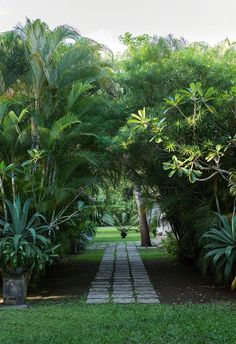 Tropical garden design: everything you need to know - You don't need to travel to a tropical island in Asia or the South Pacific to escape the pressures - Tropical Garden Design, Tropical Landscaping, Garden Landscape Design, Tropical Plants, Garden Landscaping, Tropical Gardens, Beach Landscape, Screen Plants, Design Jardin