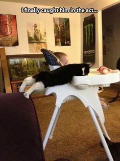 """Os gatos não têm respeito por nada. Estas 23 fotos mostram que são """"ladrões"""" de quatro patas"""