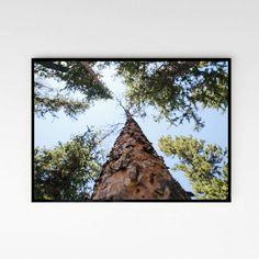 Foto plakat - Pod drzewem -  poziomy