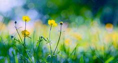 faire livrer des fleurs 26 #fleurs #bouquet