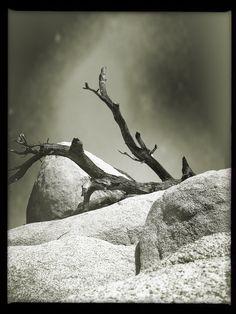 Barker Dam | joshua tree national park | california