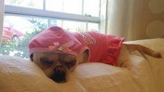 Bella knows how to enjoy a Sunday :)  Bella sabe como disfrutar un Domingo :) #puppies