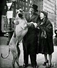 Metropolitan Opera's Helden tenor Lauritz Melchior w. his wife, petting his Great Dane dog on street.