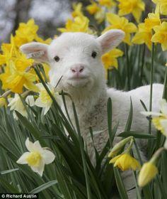 Spring Lamb <3 #SpringatSimplyBe