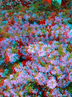 Azaleas by starg82343, via Flickr   //. Download the 3D Image Converter For Android --> https://play.google.com/store/apps/details?id=com.JERASeng.Pic2Glyph  you can generate 3D photos, out of a single image!!!!!