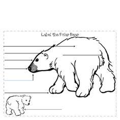 nonfiction polar bears and nonfiction books on pinterest : polar bear diagram - findchart.co